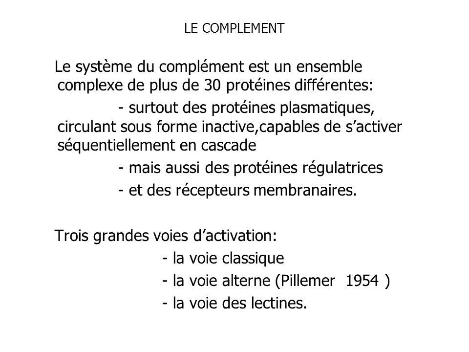 LE COMPLEMENT Le système du complément est un ensemble complexe de plus de 30 protéines différentes: - surtout des protéines plasmatiques, circulant s