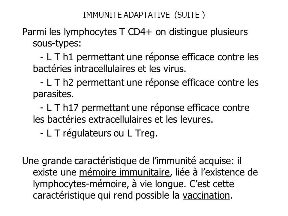 IMMUNITE ADAPTATIVE (SUITE ) Parmi les lymphocytes T CD4+ on distingue plusieurs sous-types: - L T h1 permettant une réponse efficace contre les bacté