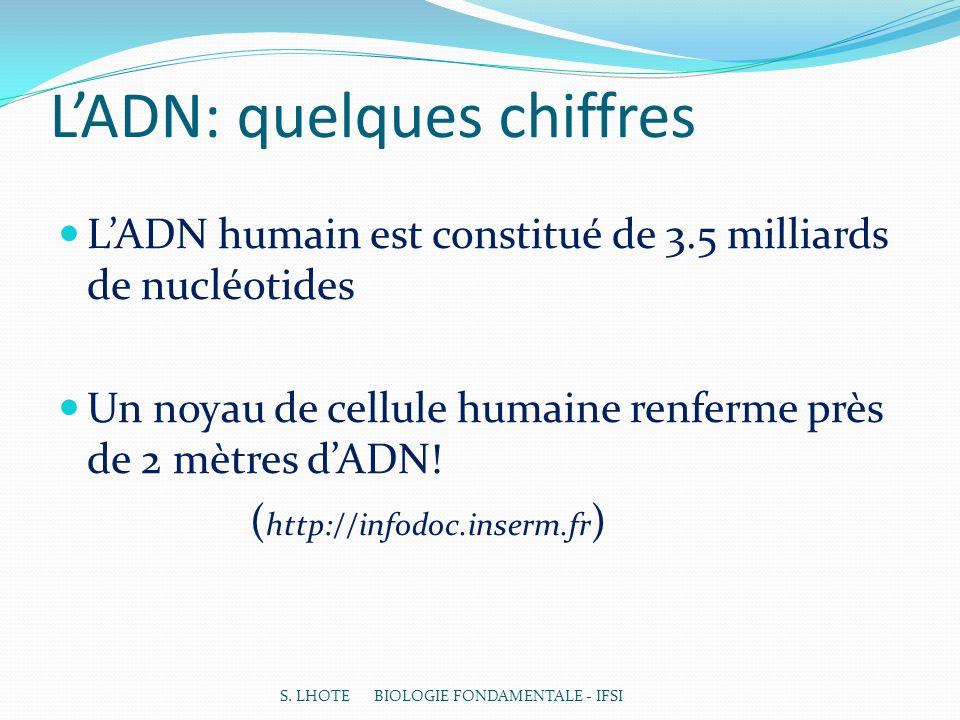 LADN: quelques chiffres LADN humain est constitué de 3.5 milliards de nucléotides Un noyau de cellule humaine renferme près de 2 mètres dADN.