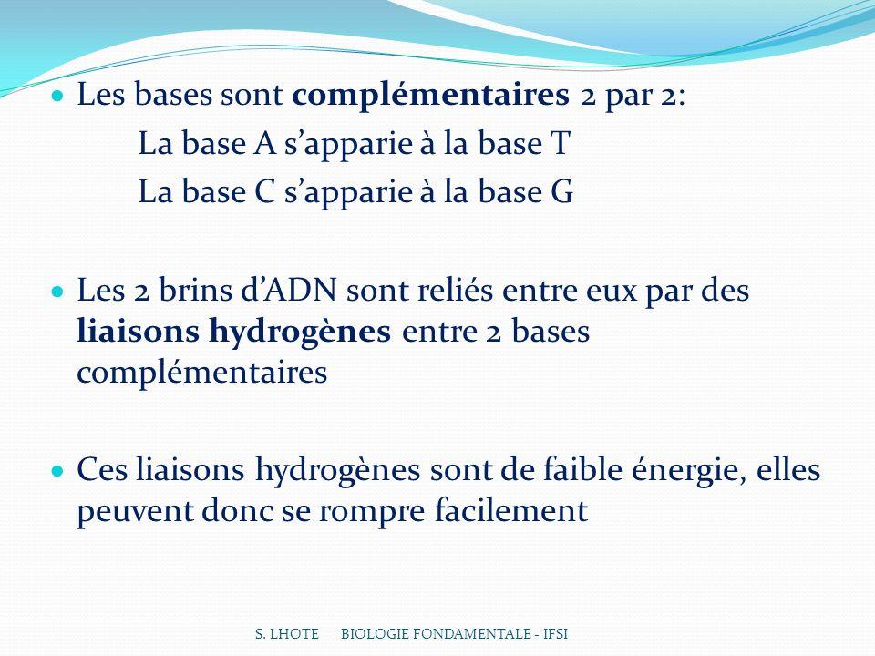 Les bases sont complémentaires 2 par 2: La base A sapparie à la base T La base C sapparie à la base G Les 2 brins dADN sont reliés entre eux par des liaisons hydrogènes entre 2 bases complémentaires Ces liaisons hydrogènes sont de faible énergie, elles peuvent donc se rompre facilement S.