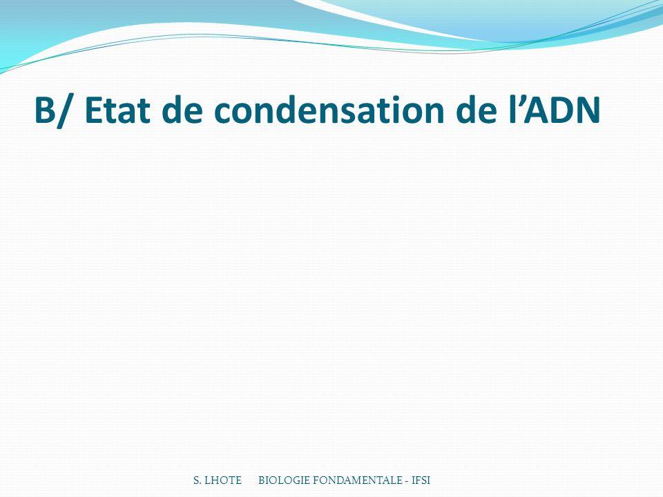 B/ Etat de condensation de lADN S. LHOTE BIOLOGIE FONDAMENTALE - IFSI