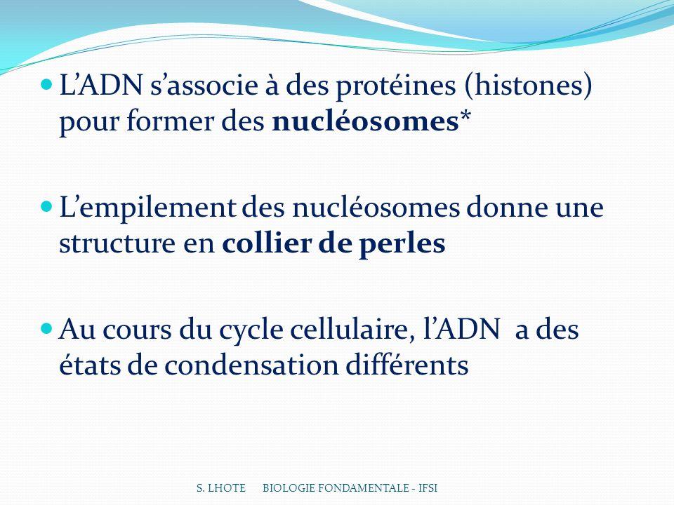LADN sassocie à des protéines (histones) pour former des nucléosomes* Lempilement des nucléosomes donne une structure en collier de perles Au cours du cycle cellulaire, lADN a des états de condensation différents S.
