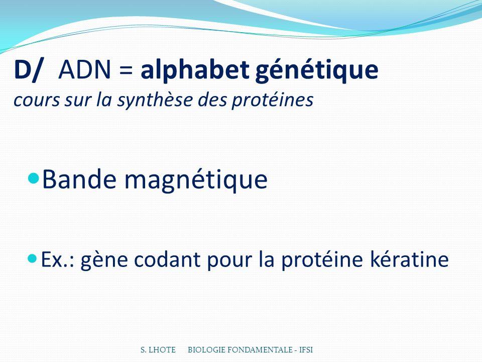 D/ ADN = alphabet génétique cours sur la synthèse des protéines Bande magnétique Ex.: gène codant pour la protéine kératine S. LHOTE BIOLOGIE FONDAMEN
