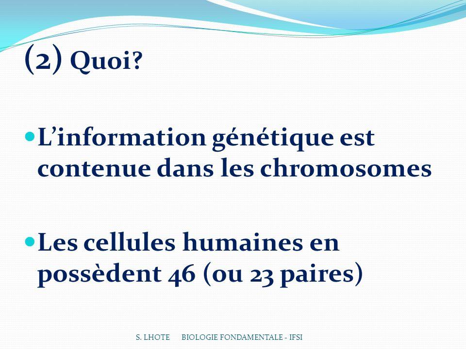 (2) Quoi? Linformation génétique est contenue dans les chromosomes Les cellules humaines en possèdent 46 (ou 23 paires) S. LHOTE BIOLOGIE FONDAMENTALE