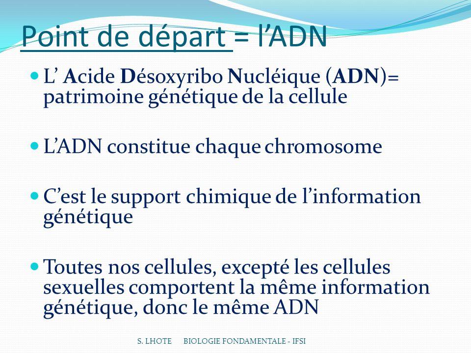 Point de départ = lADN L Acide Désoxyribo Nucléique (ADN)= patrimoine génétique de la cellule LADN constitue chaque chromosome Cest le support chimique de linformation génétique Toutes nos cellules, excepté les cellules sexuelles comportent la même information génétique, donc le même ADN S.