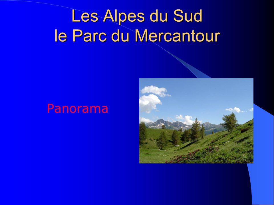 Les Îles de Hyères Porquerolles Panorama