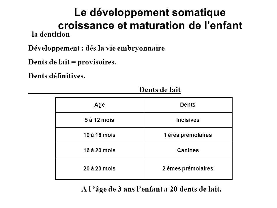 Le développement somatique croissance et maturation de lenfant la dentition Développement : dés la vie embryonnaire Dents de lait = provisoires. Dents