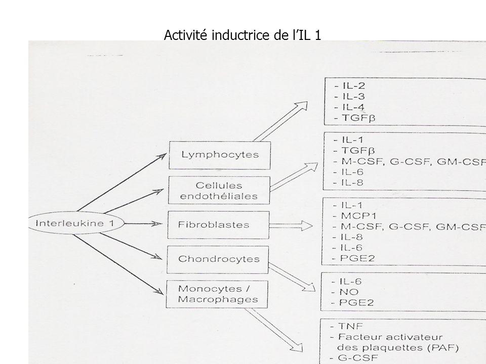 Activité inductrice de lIL 1