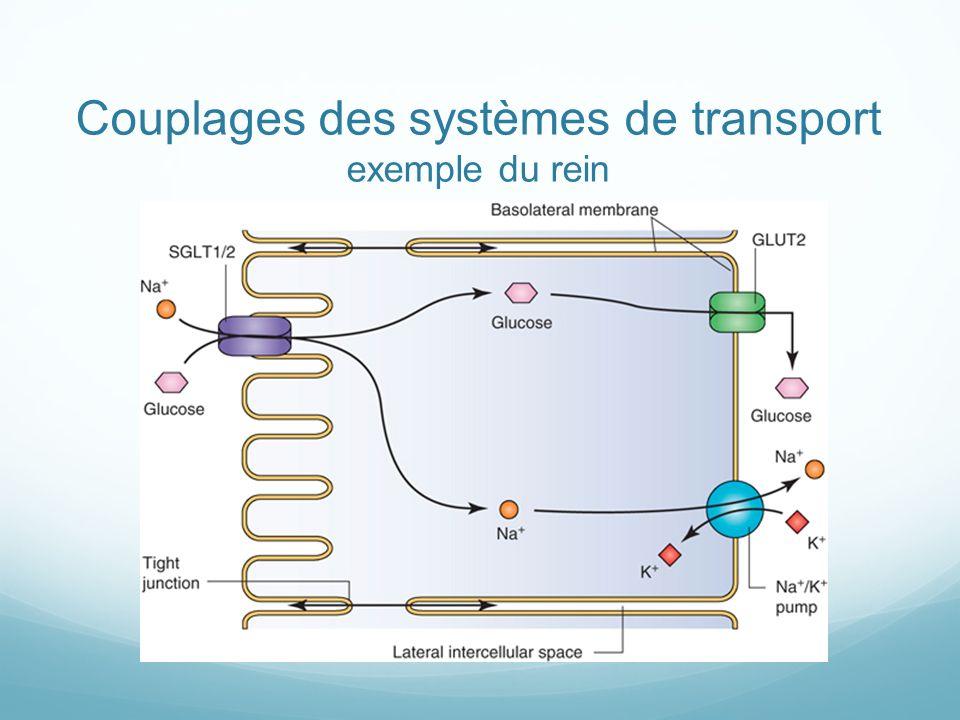 Couplages des systèmes de transport exemple du rein