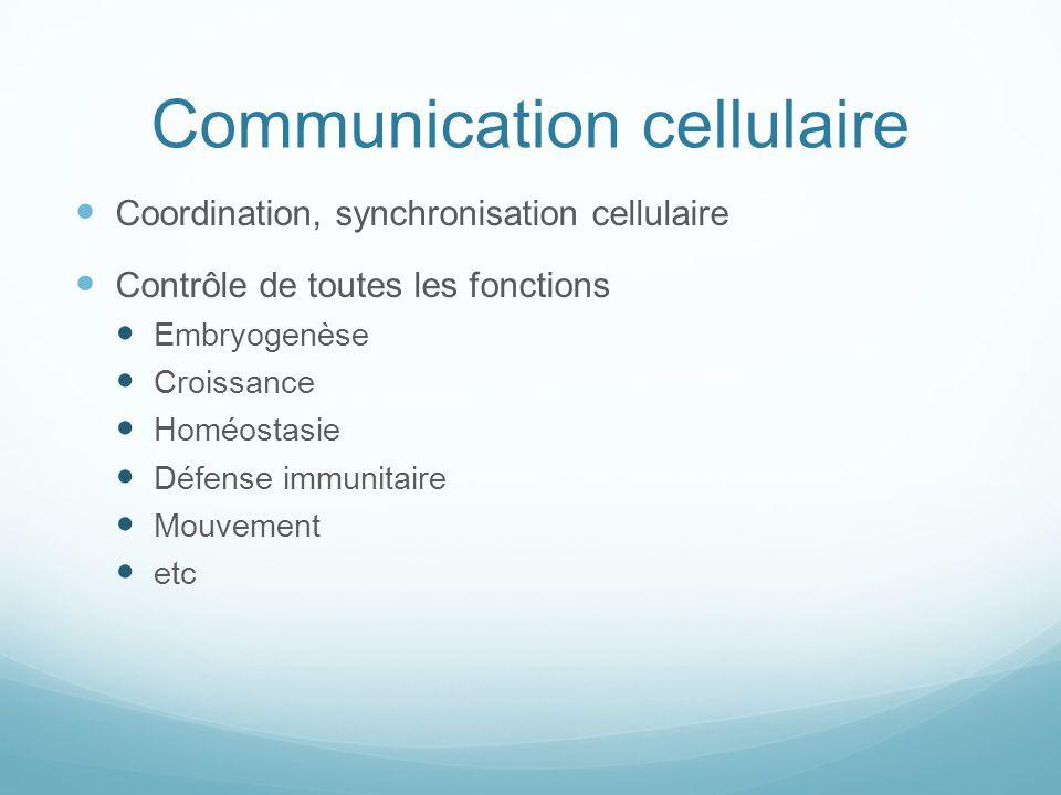 Communication cellulaire Coordination, synchronisation cellulaire Contrôle de toutes les fonctions Embryogenèse Croissance Homéostasie Défense immunit