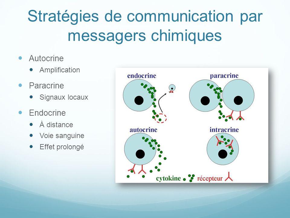 Stratégies de communication par messagers chimiques Autocrine Amplification Paracrine Signaux locaux Endocrine À distance Voie sanguine Effet prolongé