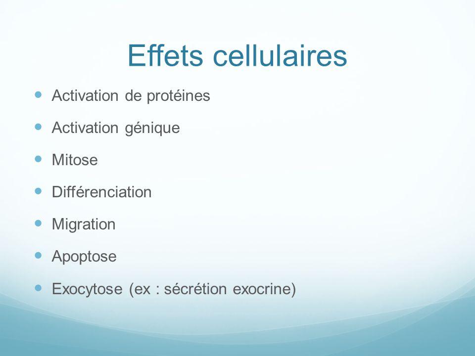 Effets cellulaires Activation de protéines Activation génique Mitose Différenciation Migration Apoptose Exocytose (ex : sécrétion exocrine)