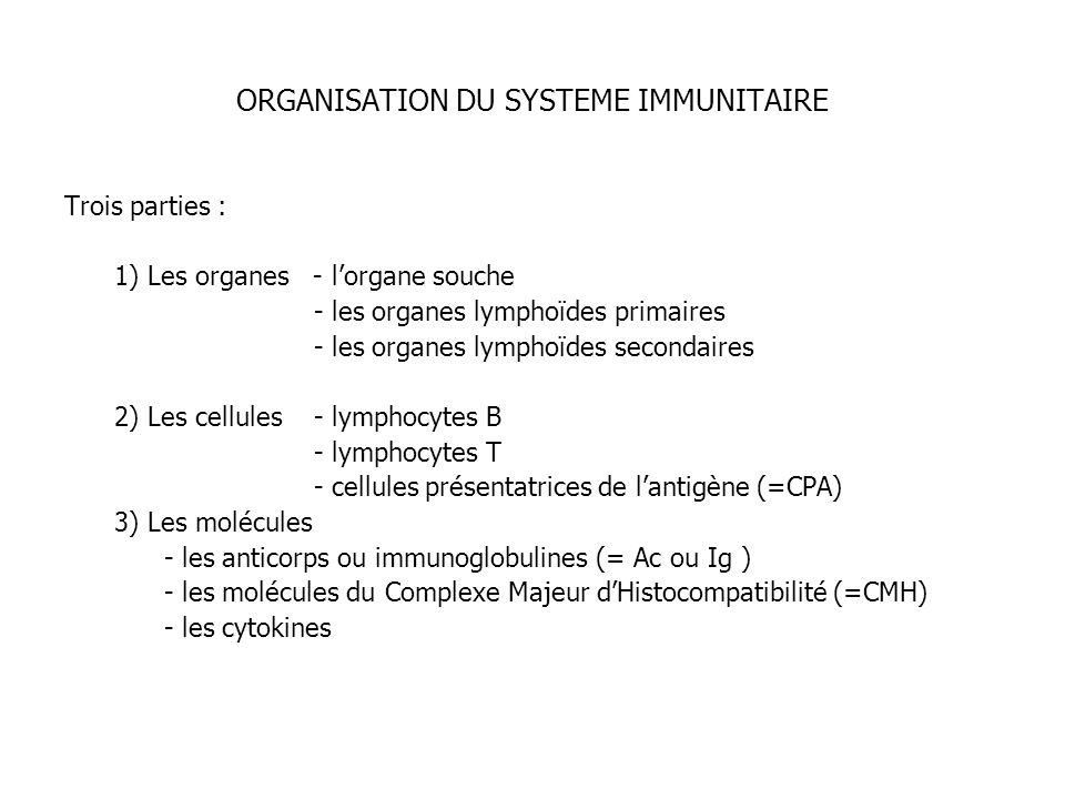 ORGANISATION DU SYSTEME IMMUNITAIRE Trois parties : 1) Les organes - lorgane souche - les organes lymphoïdes primaires - les organes lymphoïdes second