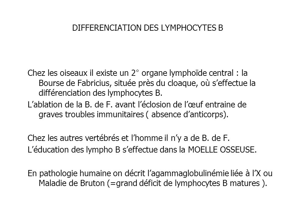 DIFFERENCIATION DES LYMPHOCYTES B Chez les oiseaux il existe un 2° organe lymphoïde central : la Bourse de Fabricius, située près du cloaque, où seffe