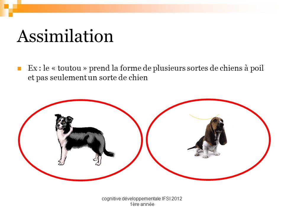 cognitive développementale IFSI 2012 1ère année Assimilation Ex : le « toutou » prend la forme de plusieurs sortes de chiens à poil et pas seulement u