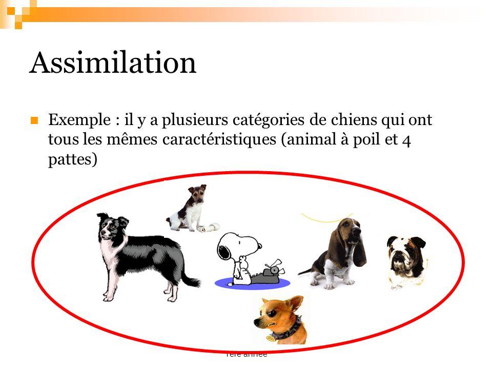 cognitive développementale IFSI 2012 1ère année Assimilation Exemple : il y a plusieurs catégories de chiens qui ont tous les mêmes caractéristiques (