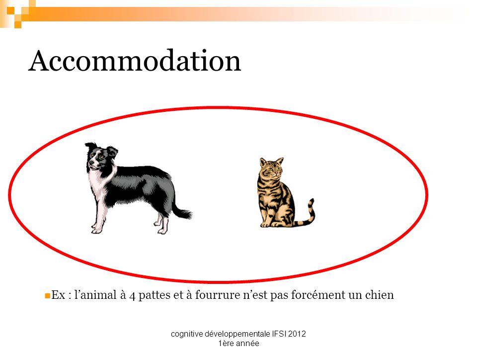 cognitive développementale IFSI 2012 1ère année Accommodation Ex : lanimal à 4 pattes et à fourrure nest pas forcément un chien