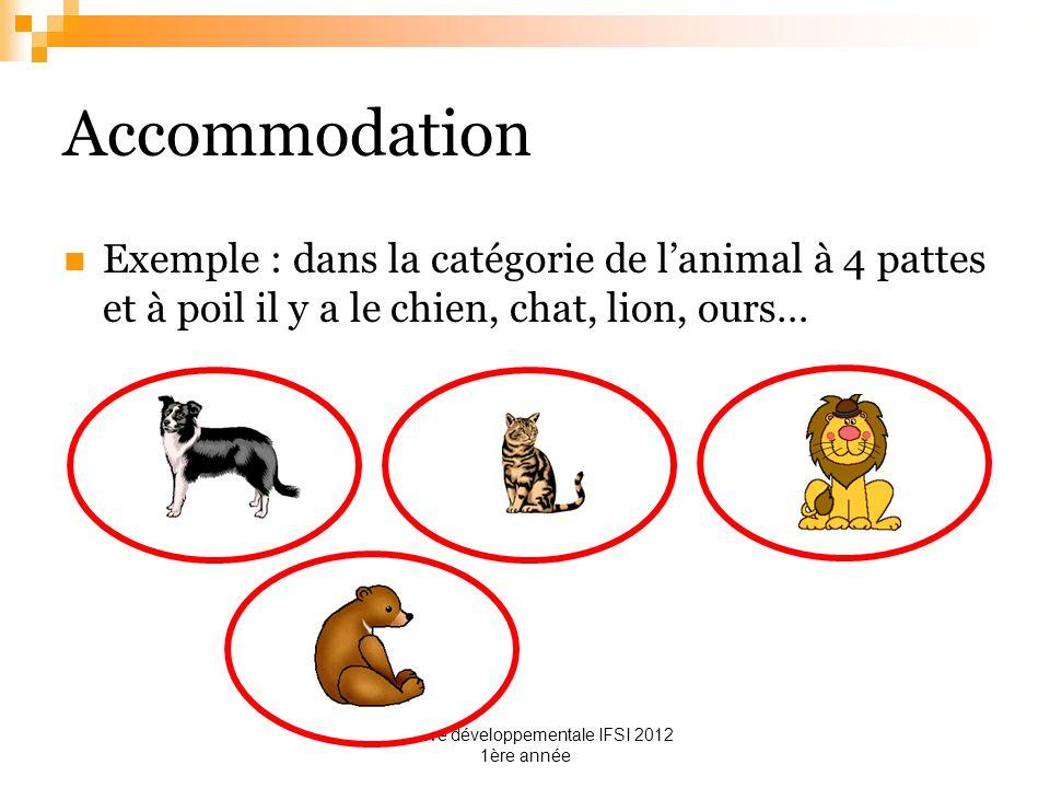 cognitive développementale IFSI 2012 1ère année Accommodation Exemple : dans la catégorie de lanimal à 4 pattes et à poil il y a le chien, chat, lion,