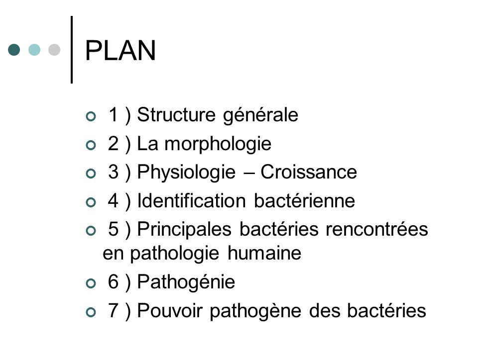 PLAN 1 ) Structure générale 2 ) La morphologie 3 ) Physiologie – Croissance 4 ) Identification bactérienne 5 ) Principales bactéries rencontrées en pa