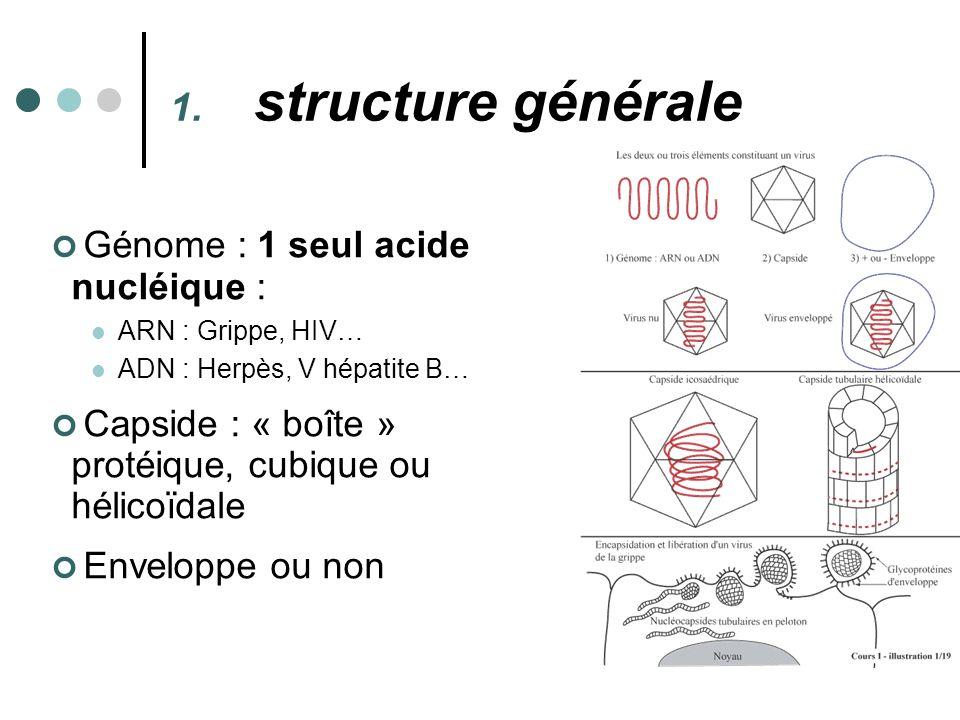 Génome : 1 seul acide nucléique : ARN : Grippe, HIV… ADN : Herpès, V hépatite B… Capside : « boîte » protéique, cubique ou hélicoïdale Enveloppe ou no