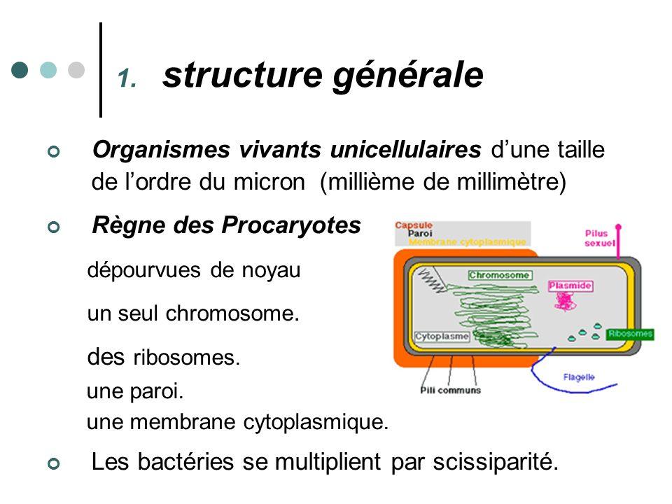 Organismes vivants unicellulaires dune taille de lordre du micron (millième de millimètre) Règne des Procaryotes dépourvues de noyau un seul chromosom