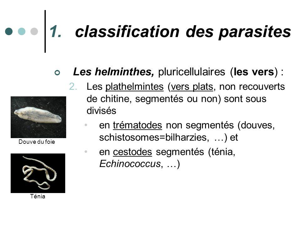 1.classification des parasites Les helminthes, pluricellulaires (les vers) : 2.Les plathelmintes (vers plats, non recouverts de chitine, segmentés ou