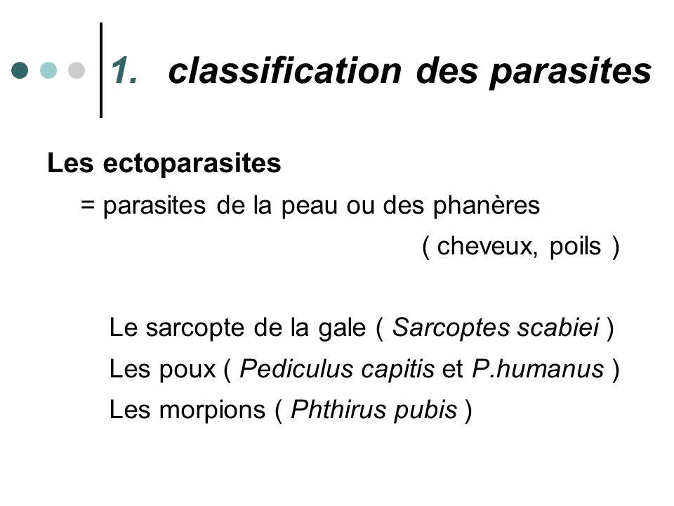 1.classification des parasites Les ectoparasites = parasites de la peau ou des phanères ( cheveux, poils ) Le sarcopte de la gale ( Sarcoptes scabiei