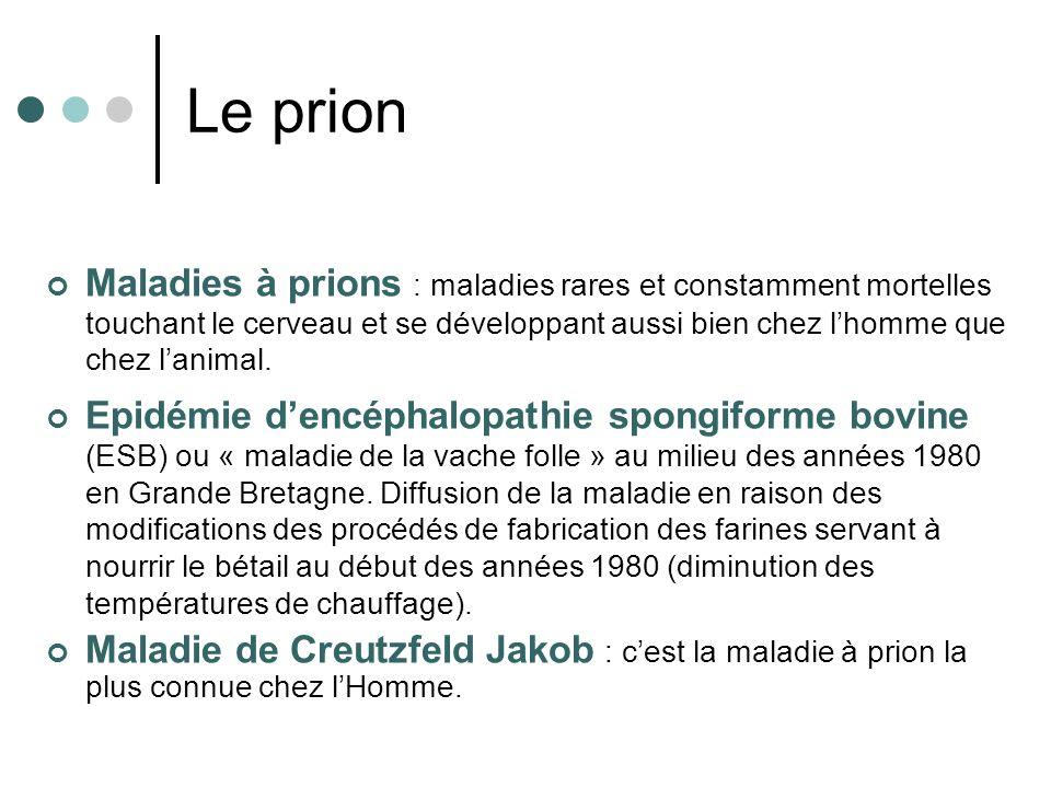 Maladies à prions : maladies rares et constamment mortelles touchant le cerveau et se développant aussi bien chez lhomme que chez lanimal. Epidémie de