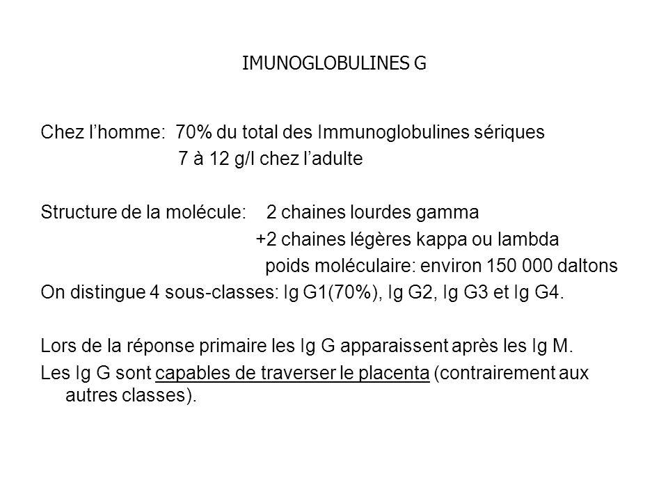 IMUNOGLOBULINES G Chez lhomme: 70% du total des Immunoglobulines sériques 7 à 12 g/l chez ladulte Structure de la molécule: 2 chaines lourdes gamma +2 chaines légères kappa ou lambda poids moléculaire: environ 150 000 daltons On distingue 4 sous-classes: Ig G1(70%), Ig G2, Ig G3 et Ig G4.