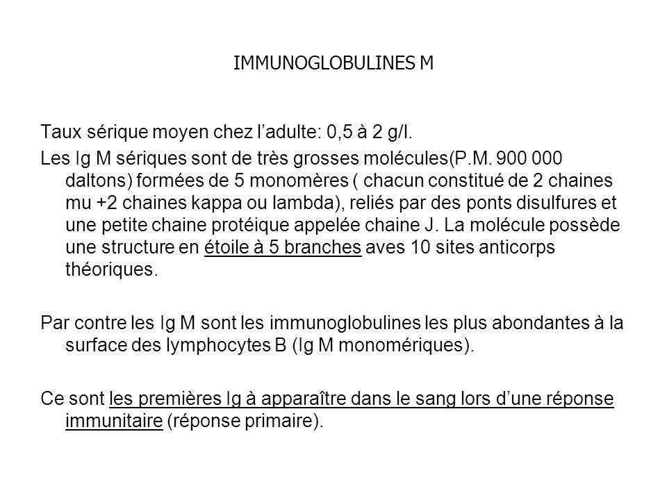 IMMUNOGLOBULINES M Taux sérique moyen chez ladulte: 0,5 à 2 g/l. Les Ig M sériques sont de très grosses molécules(P.M. 900 000 daltons) formées de 5 m