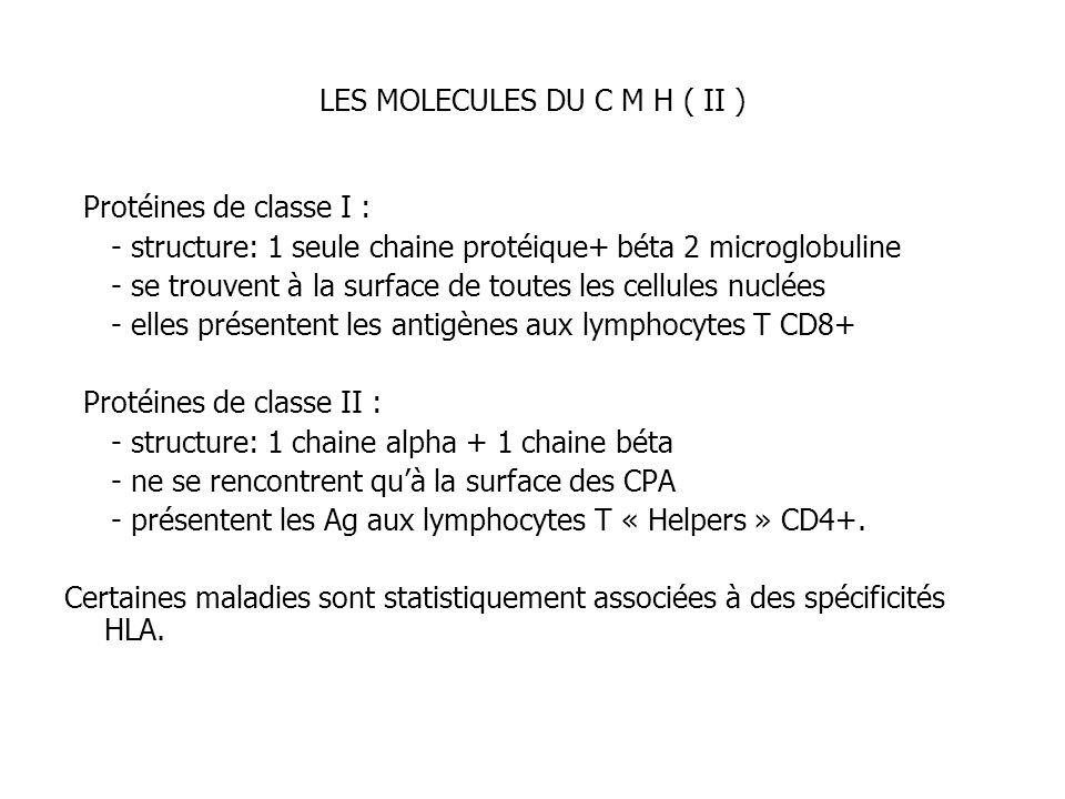 LES MOLECULES DU C M H ( II ) Protéines de classe I : - structure: 1 seule chaine protéique+ béta 2 microglobuline - se trouvent à la surface de toute