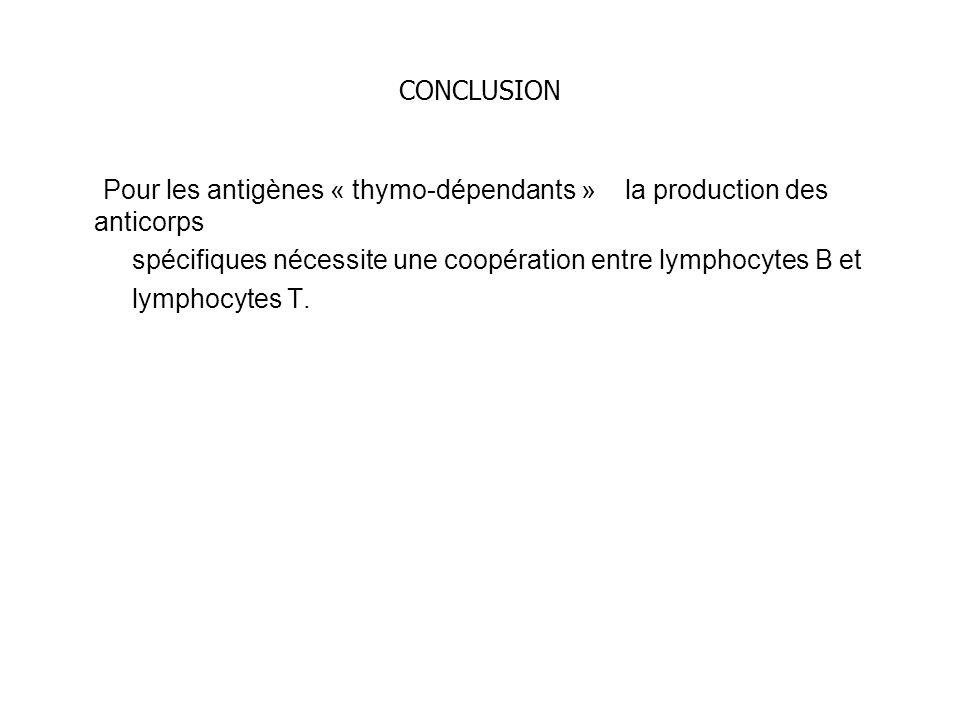 CONCLUSION Pour les antigènes « thymo-dépendants » la production des anticorps spécifiques nécessite une coopération entre lymphocytes B et lymphocyte