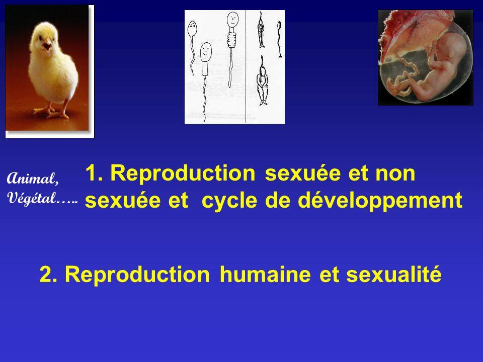 1. Reproduction sexuée et non sexuée et cycle de développement 2. Reproduction humaine et sexualité Animal, Végétal…..