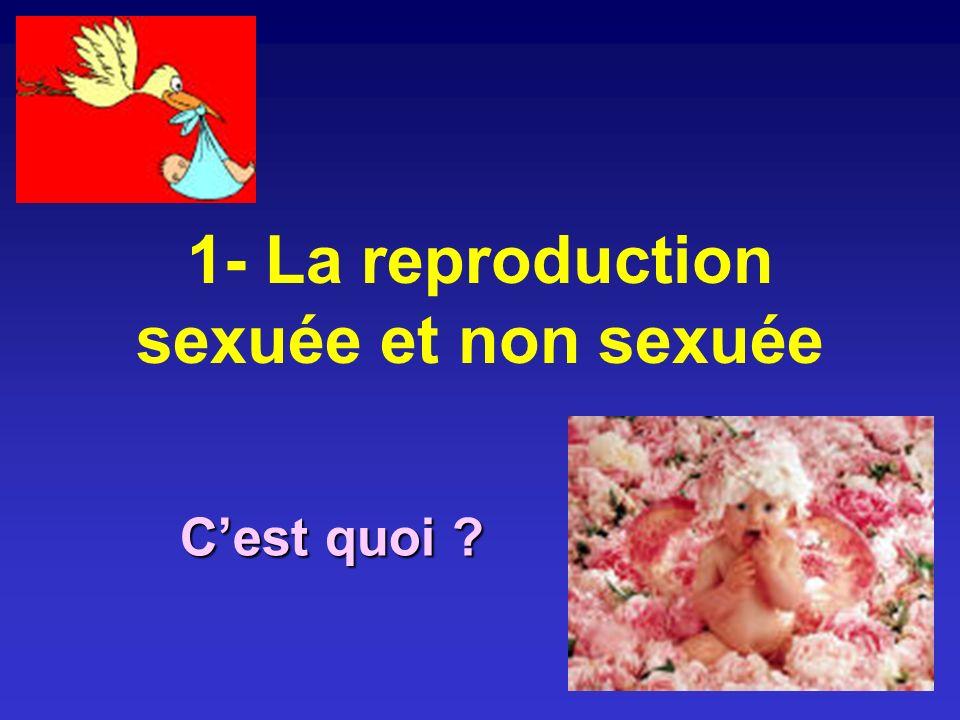 1- La reproduction sexuée et non sexuée Cest quoi ?