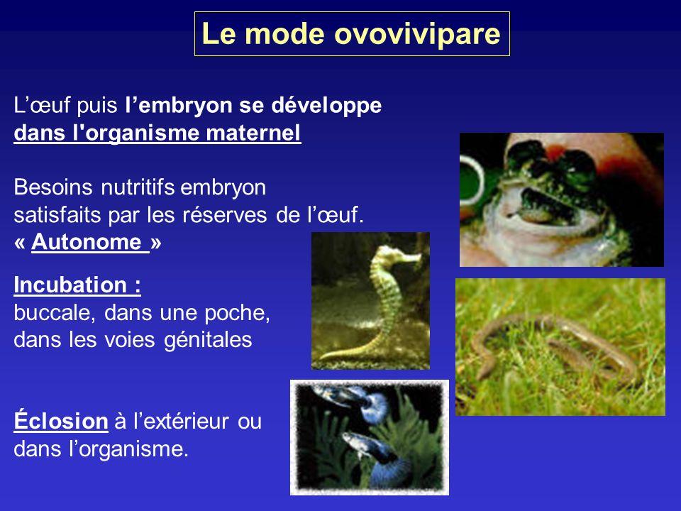 Le mode ovovivipare Lœuf puis lembryon se développe dans l'organisme maternel Besoins nutritifs embryon satisfaits par les réserves de lœuf. « Autonom