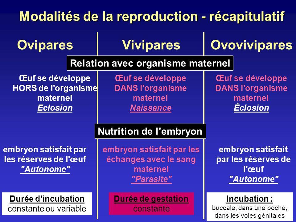Modalités de la reproduction - récapitulatif OviparesVivipares Œuf se développe HORS de l'organisme maternel Eclosion Œuf se développe DANS l'organism