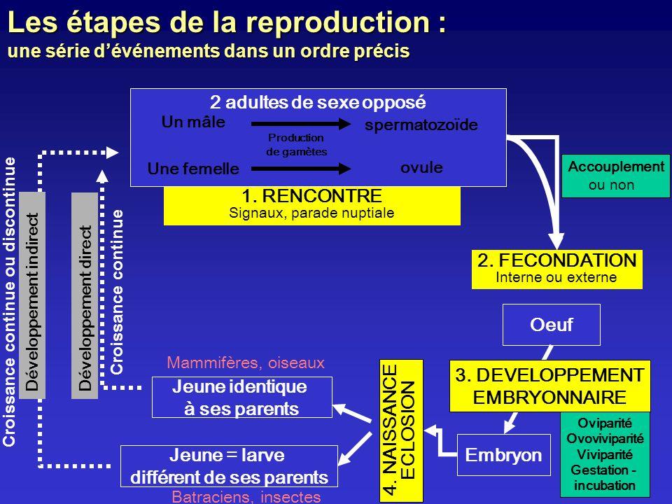 Les étapes de la reproduction : une série dévénements dans un ordre précis 4. NAISSANCE ECLOSION Jeune identique à ses parents Mammifères, oiseaux Jeu