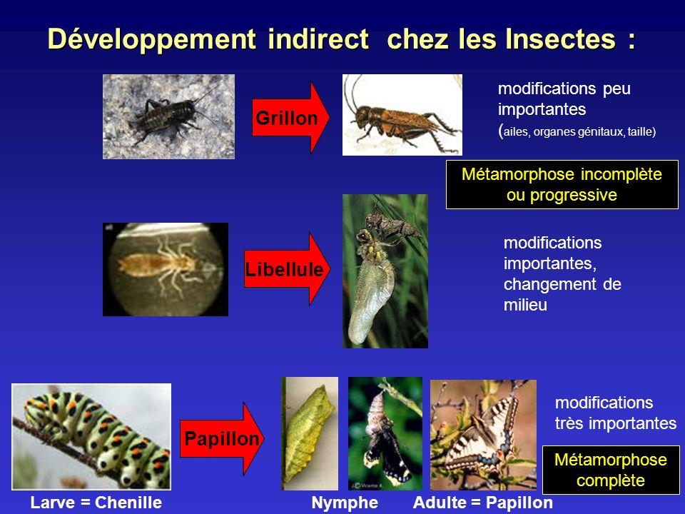 Développement indirect chez les Insectes : Métamorphose complète Métamorphose incomplète ou progressive modifications importantes, changement de milie