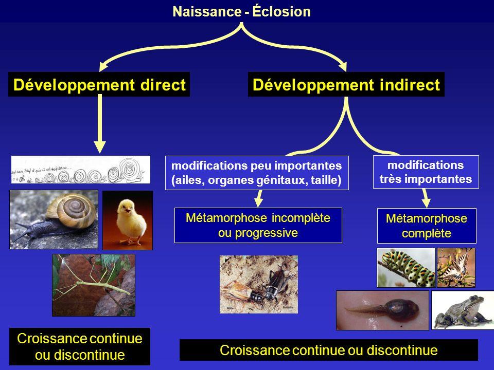 Naissance - Éclosion Développement indirectDéveloppement direct Métamorphose incomplète ou progressive Métamorphose complète modifications peu importa