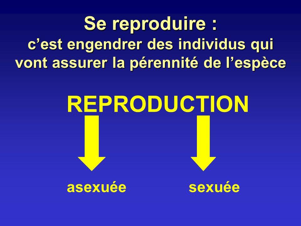 Reproduction asexuée ou 1 1 = 1 Clone dindividus Faire du nombre