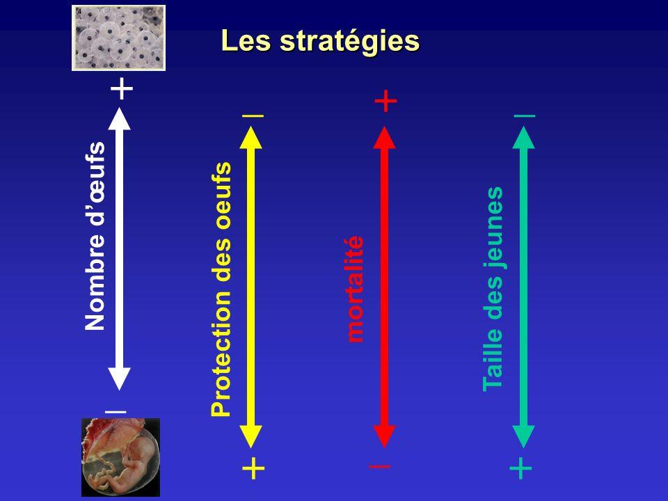 Les stratégies Nombre dœufs + _ Protection des oeufs _ + mortalité + _ Taille des jeunes _ +