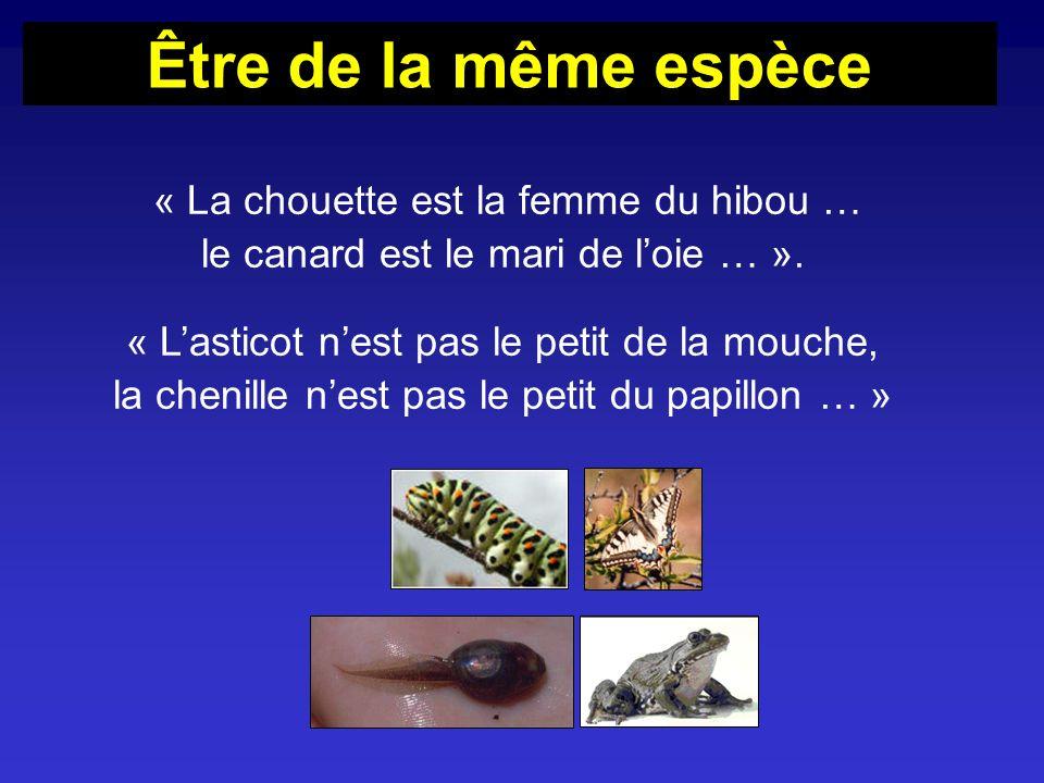 « La chouette est la femme du hibou … le canard est le mari de loie … ». « Lasticot nest pas le petit de la mouche, la chenille nest pas le petit du p