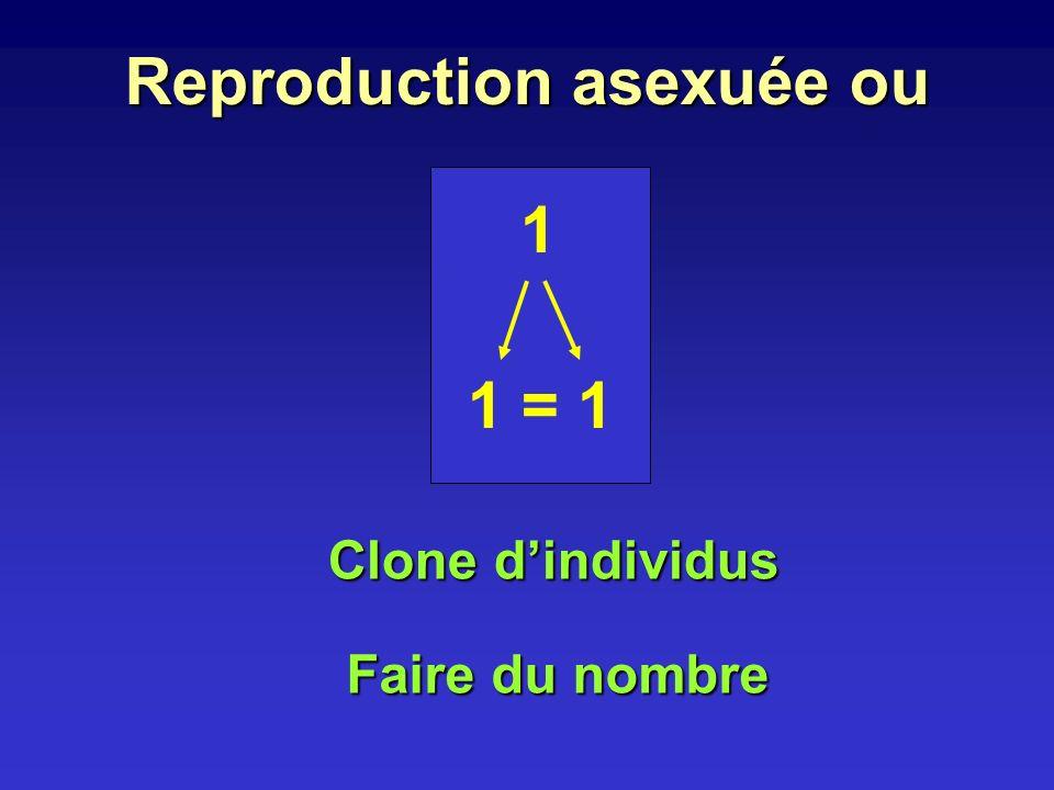 Reproduction sexuée ou 1 + 1 autre différent 1 nouveau Procréation 2 étapes - formation de gamètes - rencontre de 2 gamètes Qui fait un œuf, fait du neuf