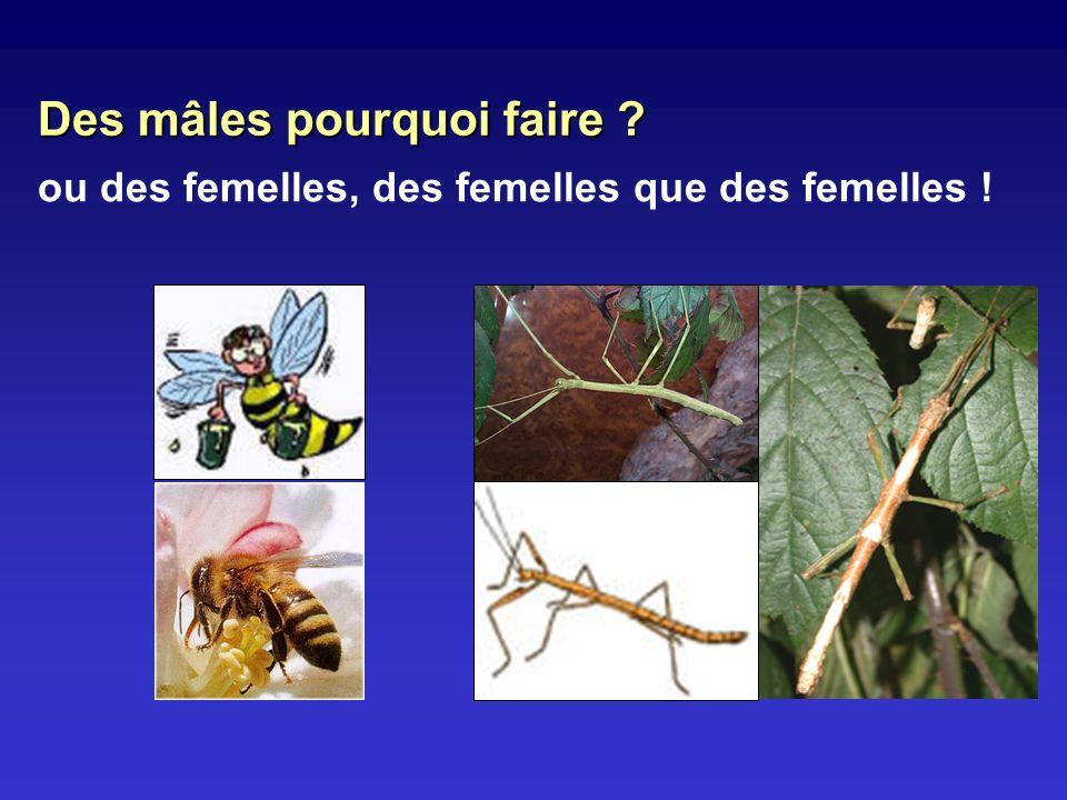ou des femelles, des femelles que des femelles ! Des mâles pourquoi faire ?