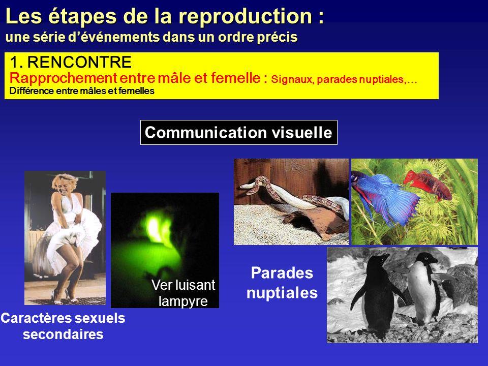 1. RENCONTRE Rapprochement entre mâle et femelle : Signaux, parades nuptiales,… Différence entre mâles et femelles Les étapes de la reproduction : une