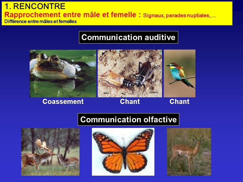 1. RENCONTRE Rapprochement entre mâle et femelle : Signaux, parades nuptiales,… Différence entre mâles et femelles Communication auditive Communicatio