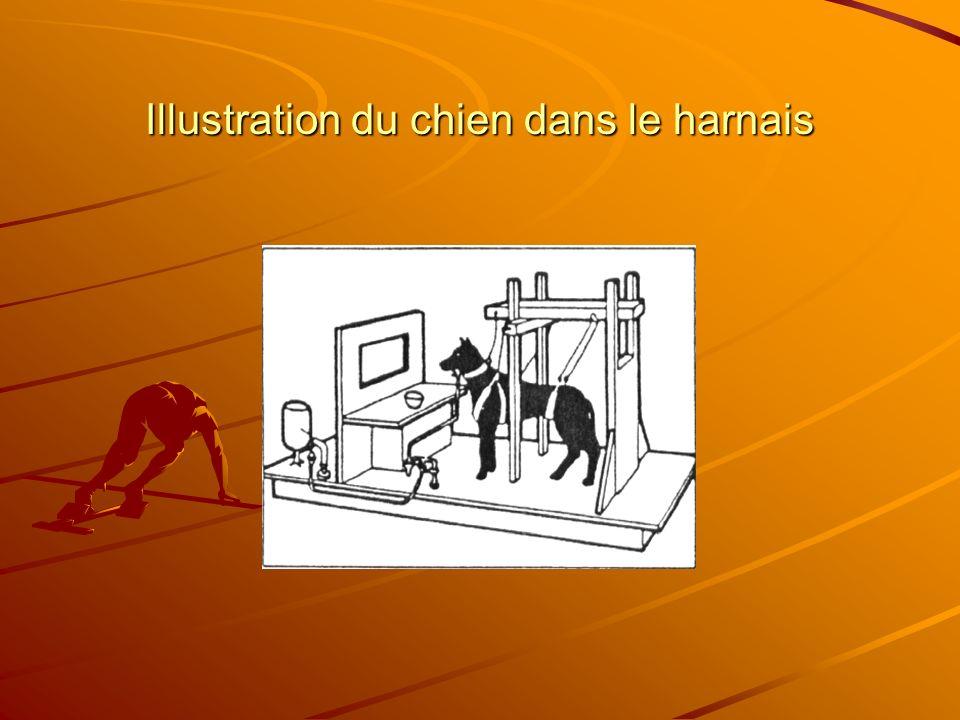 Chez lanimal Principe de lexpérience Maier et Seligman, 1967 Gr.