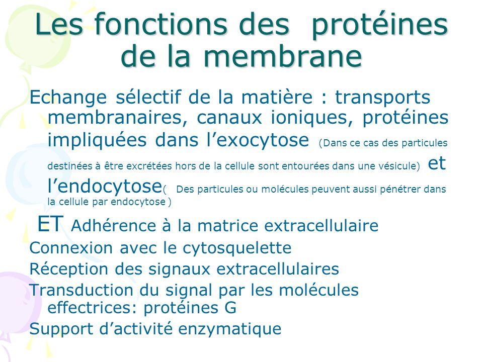 Les fonctions des protéines de la membrane Echange sélectif de la matière : transports membranaires, canaux ioniques, protéines impliquées dans lexocy