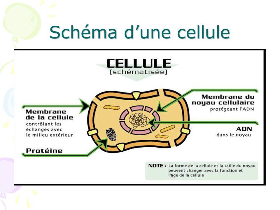 Le transport passif Exemples de médicaments qui agissent au niveau des canaux: 1.Antagonistes calciques dans les muscles lisses et le coeur 2.Anesthésiques locaux qui bloquent les canaux sodiques dans les terminaisons nerveuses.