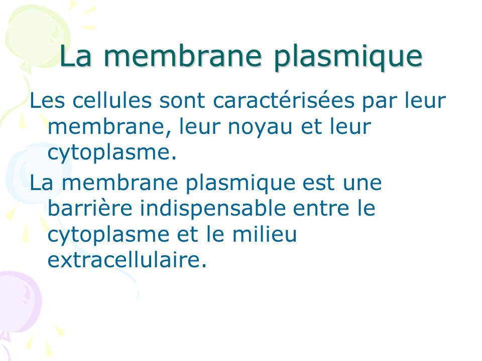 La membrane plasmique Les cellules sont caractérisées par leur membrane, leur noyau et leur cytoplasme. La membrane plasmique est une barrière indispe